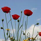 Poppy by RJ-Salazar