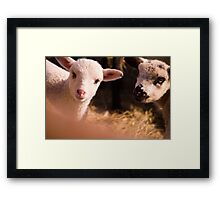 tweetletee and tweedledum Framed Print