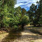 Mountain Creek NSW Australia No ! by Kym Bradley