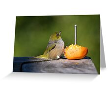 Silver Eye.....sitting down on the job......! Greeting Card