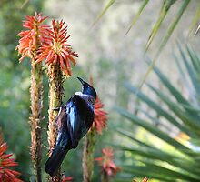 TUI by Bloom by Sam Wales