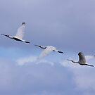 Spoonbills In Flight  by Kym Bradley