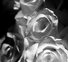White Roses by Samantha Higgs