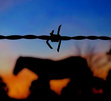 Fenced In by kurrawinya