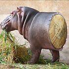 Log Hippo by Felfriast