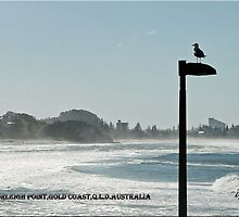 View of Surfers Paradise by Jon de Graaff