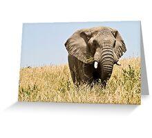 African bush elephant  (Loxodonta africana) Greeting Card