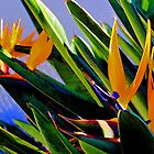 Abstract Composition—Abstracted Birds of Paradise (Flowers)—Version Three  by Ivana Redwine