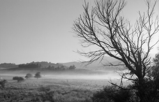 tree in morning mist by Barbara Fischer