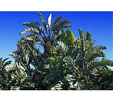 GIANT STRELITZIA Photographic Print