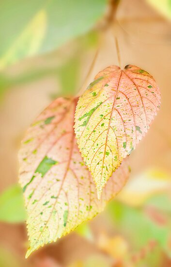 Autumn leaves by Jenny Dean