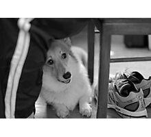 """Did Somebody Say Walk ? "" Photographic Print"