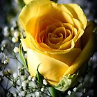 Yellow rose by moregoodart