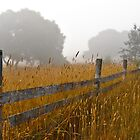 Foggy Fenceline by LadyEloise