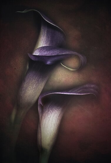 Lilies by EbyArts