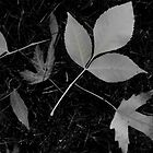 B&W Leaves by kchase