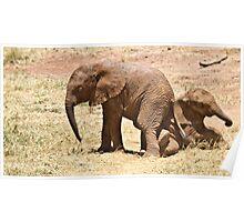 Samburu Elephant calves playing Poster