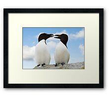 Razorbills chatting, Saltee Island, County Wexford, Ireland Framed Print