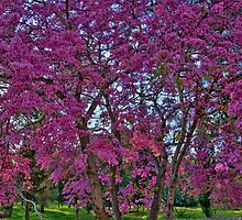 The Pink Tree by Nira Dabush