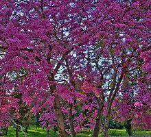 The Pink Tree by Nira Dabush