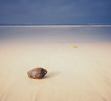 Coconut on the beach by naumenko