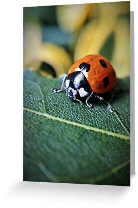 Ladybird by Paul Duncan