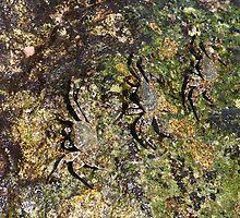 Perfectly Camouflaged by Wayne Gerard Trotman