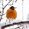 Cold Feet - Robin on a Snowy Branch by Kenneth Keifer