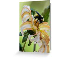 Bumblebee on dahlia Greeting Card
