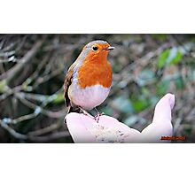 """"""" I'm sorry it's another Robin"""" (but this one was special) Photographic Print"""