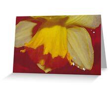 Yellow Daffodils 1 Greeting Card