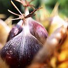 Sweet chestnut by Paul Duncan