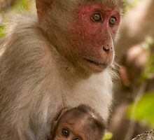 Monkey family by NatureBeauty