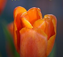 Orange tulip and text Happy Mother's Day Card by walstraasart
