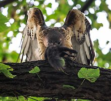Red Tailed Hawk with Black Squirrel by Mikell Herrick