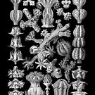 Sea Creatures in Black and White (Gorgonida) by RedPine