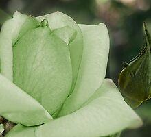 The wearing of the green by Celeste Mookherjee