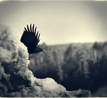 Snow Crow by Nazareth