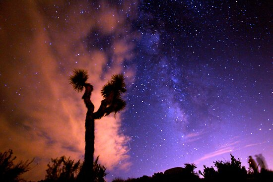 Milky Way Over Pink Joshua Tree by Gavin Heffernan