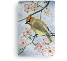 A Waxwing in the Dogwood Canvas Print