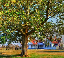Magnolia Tree at Appomattox Manor by WestBigSky