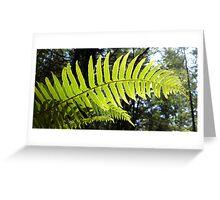 Sunlit Ferns Greeting Card