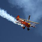 Wing Walker by Di Jenkins