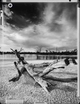 Fallen tree in dry lake - Kings Billabong by hangingpixels
