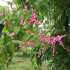 Pink Flowering Vine by paulbl