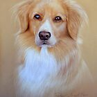 nova scotia duck tolling retriever by Peter Skillen