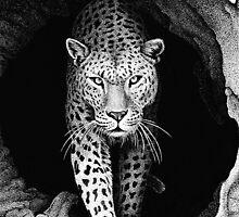 Leopard In A Log by Ron  Monroe