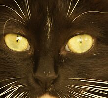 Eyes Of A Cat by Tina Hailey