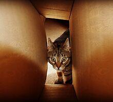 Tunnel Vision by jodi payne