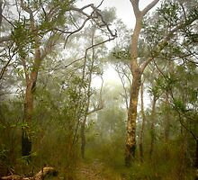 Morning mist, Hawkins Lookout ~ Wiseman's Ferry NSW by Rosalie Dale